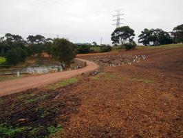 Wetland 2012